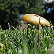 Chipmunks View Of A Mushroom Poster