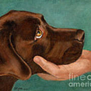 Chocolate Lab Head In Hand Poster