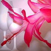 Christmas Cactus And Two Glasses Poster