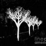 Christmas Lights In Black And White Poster