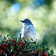 Christmas Mockingbird Poster
