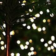 Christmas Palm Poster