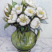 Christmas Roses Poster by Gillian Lawson