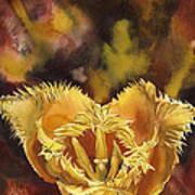 Christmas Tulip Poster