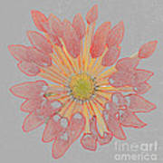 Chrysanthemum As Coloured Pencil Drawing Poster