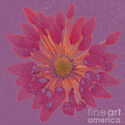 Chrysanthemum Digitally Softly Toned Poster