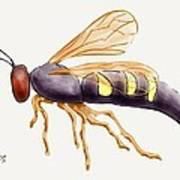 Cicada Killer Wasp Poster by Stacy C Bottoms