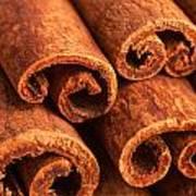 Cinnamon - Cinnamomum Poster
