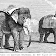 Circus Elephants, 1884 Poster