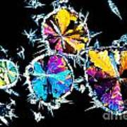 Citric Acid Crystals In Polarized Light Poster