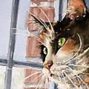 City Cat Poster