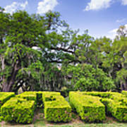 City Park New Orleans Louisiana Poster