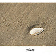 Clam  Poster by Artist and Photographer Laura Wrede
