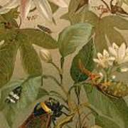 Clematis Cicada And Beetles 1894 Poster