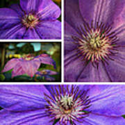 Clematis Collage Poster