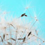 Close-up Dandelion Seeds Against Blue Poster