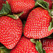 Close Up Of Delicious Strawberries Poster