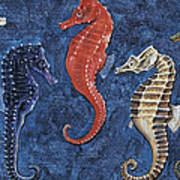 Close-up Of Five Seahorses Side By Side  Poster