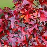 Close View Red Oak Leaves Poster