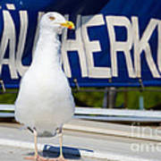 Closeup Of A Seagull On A Fisher Boat  Poster