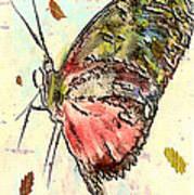 Cloud Butterfly Poster by Jill Balsam