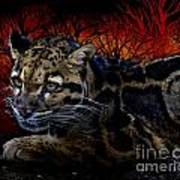 Clouded Leopard Two Poster