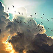 Clouds And Birds Poster by Dorothy Walker