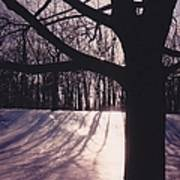 Clove Lakes Park In Winter Poster