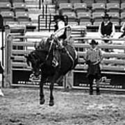 Clown Watches Bronc Bw Poster