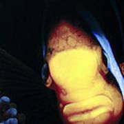 Clownfish 8 Poster