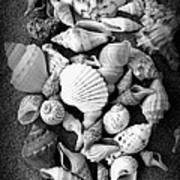 Cluster Of Shells Poster by Diane Reed
