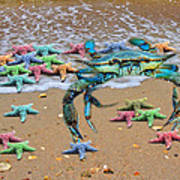 Coastal Crab Collection Poster