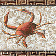 Coastal Crab Decorative Painting Greek Border Design By Madart Studios Poster