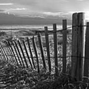 Coastal Dunes In Black And White Poster