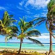 Coastal Palm Trees Poster