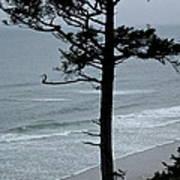 Coastal Tree Poster
