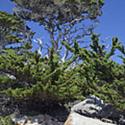 Coastal Trees In California's Point Lobos State Natural Reserve Poster by Bruce Gourley