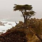 Coastline Cypress Poster