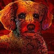 Cockapoo Dog Poster