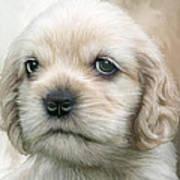 Cocker Pup Portrait Poster