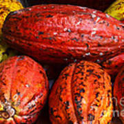 Cocoa Pods Poster