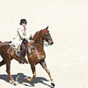 Coffee Saddlebred Poster