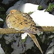 Cold Dove Poster