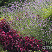 Coleus And Lavender Poster