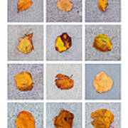Collage - Leaves On Granite 1 Poster