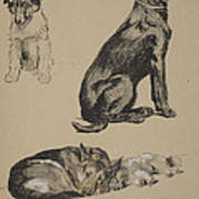 Collie, Retriever, Alstian And Keeshund Poster