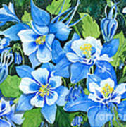 Colorado Columbines Poster