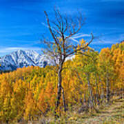 Colorado Fall Foliage Back Country View Poster