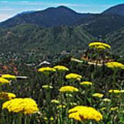 Colorado Rocky Mountain Poster