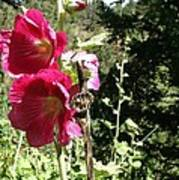 Colorado Wildflower Poster